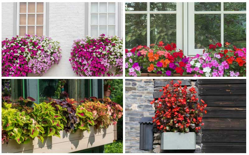 Enjoy Your Flowers from the Inside with a Window Boxes.