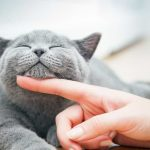 How Technology Can Help You Care for Your Cat