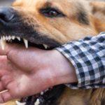 How Should I File A Dog BiteReport?