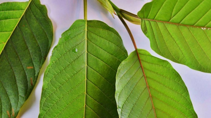 Kratom Capsules and Their Effects – Key Facts To Know