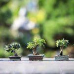 Bonsai Tree helpful