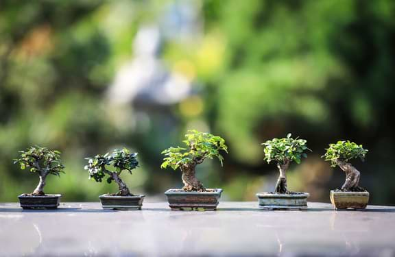 How is a Bonsai Tree Helpful for a Healthy Life?