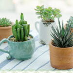 Can succulents stay in small pots